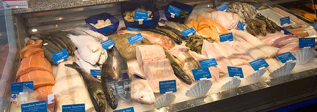 fisch kaufen